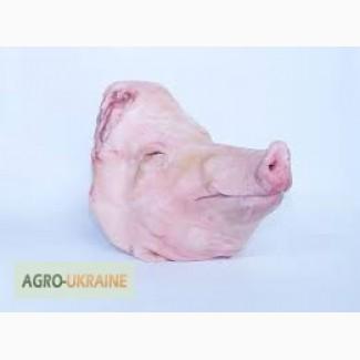 Продам голову свиную