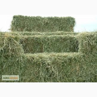 Люцерна, луговое сено по 60гр вместе с доставкой