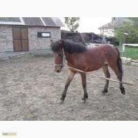 Кінь (кобила, лоша)