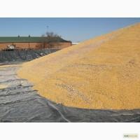 Тенты для зерна 4 х 6