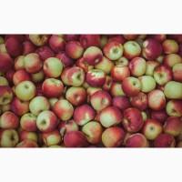 Яблука куплю