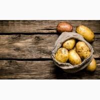 Продам картоплю СЛОВ#039;ЯНКА та САНТЕ