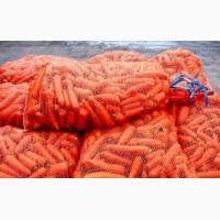 Продам морковь в больших объемах (от 5 тон)