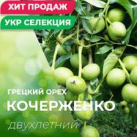 Продам Грецкий орех, сорт Кочерженко