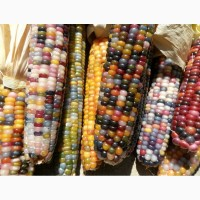 Купуємо кукурудзу (побічний продукт кукурудзи)