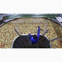 Компанія укладає договір на постачання яблучного пюре оптом