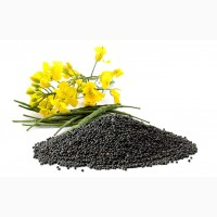 Семена ярового рапса Хайола 401 Alta Seeds