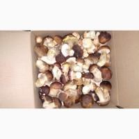 Белые грибы замороженные (целые, В/с, 1-й сорт 2-й сорт)