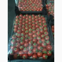 Продам помидор турецкий сорт Коктейль