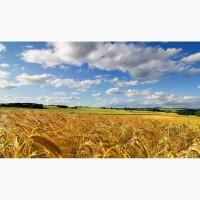 Закупаем кукурузу, пшеницу, сою, ячмень по Украине