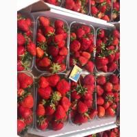 Продам ягоду Клубники