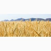 Закупка фуражного зерна по Україні+самовивіз