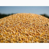 Закупляєм кукурудзу подрібнену(крупку), побічний продукт кукурудзи