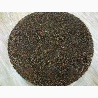 Продам семена Амаранта черного Лекарственного