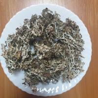 Продам ісландський мох