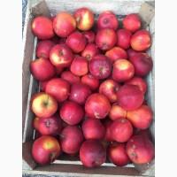 Яблука оптом, еліза, Гренни Смит