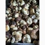 Продам морожені білі гриби 2020 1-3 сорт