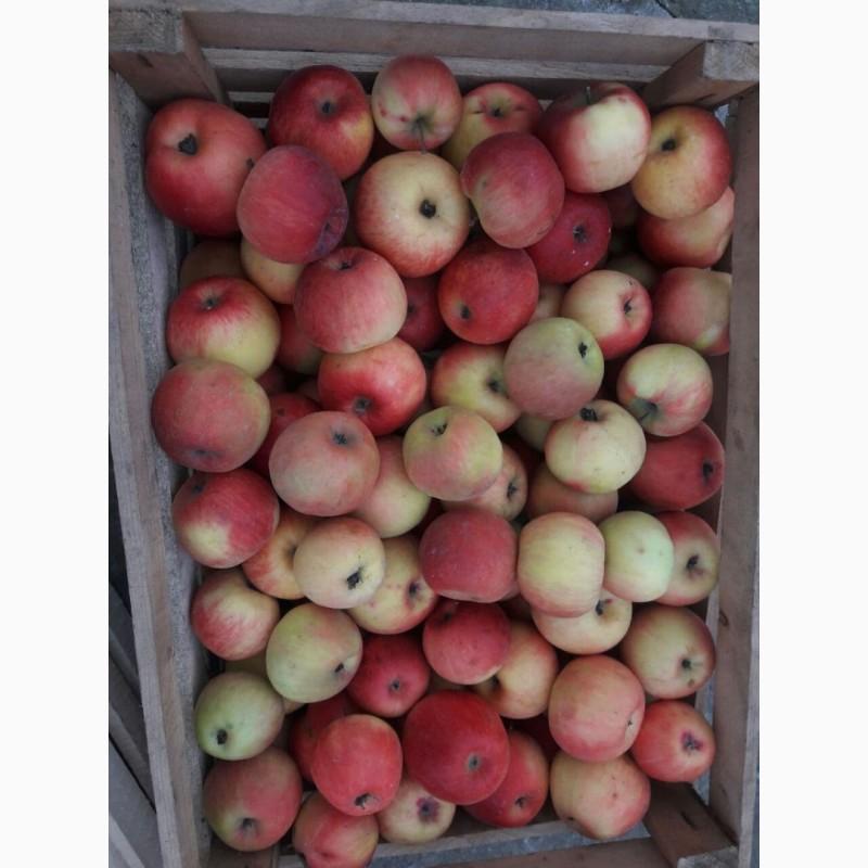 Фото 4. Продам сок яблочный, яблочно-грушевый, прямого отжима