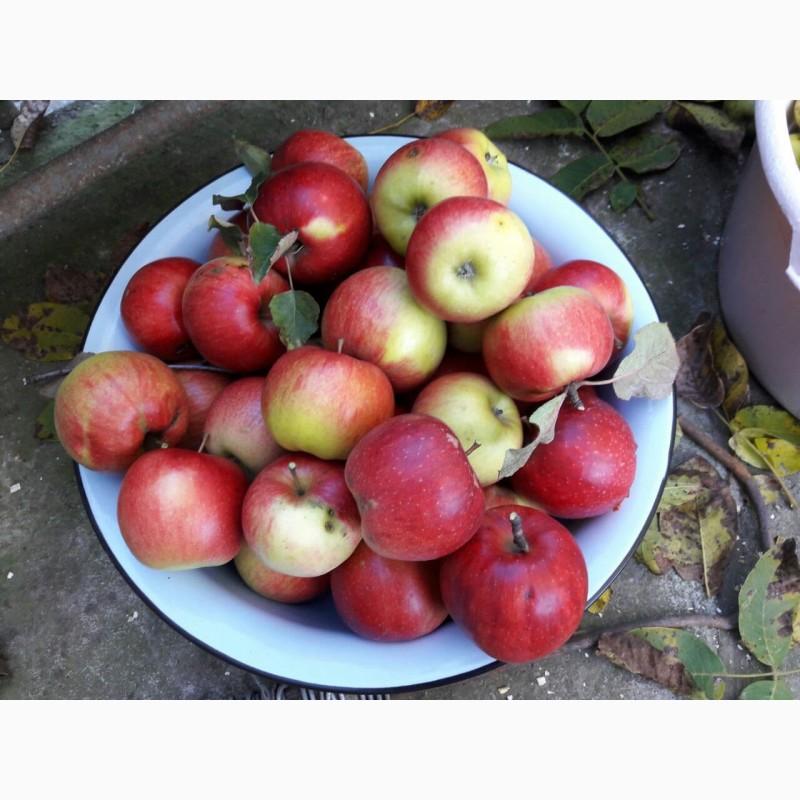 Фото 5. Продам сок яблочный, яблочно-грушевый, прямого отжима