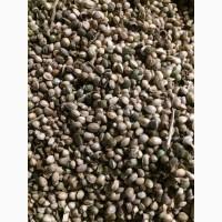 Продам семена конопли технической