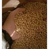 Максус насіння сої раундап (США) перша репродукція
