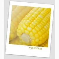 Продам Насіння надцукрової кукурудзи Мегалодон, 50 шт