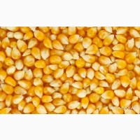 Кукуруза Бразилия 225 $ / т
