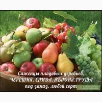 Черешя, слива, яблоня и др. (саженцы) продажа под заказ - любой сорт