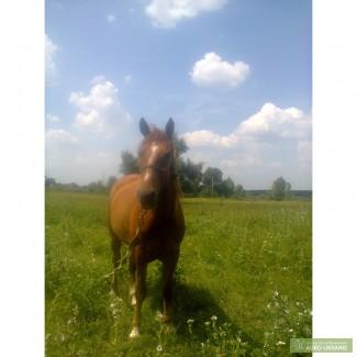 Купить лошадь в московской области