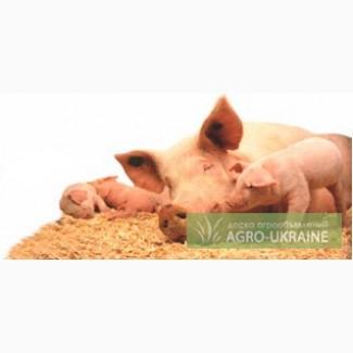 Продаем Белково - минеральные добавки для Свиноматок 10-20% (Польша)