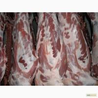 Продам мясо Свинина и Говядина – Полутуши, Блочка, Разделка . хорошая цена и ...