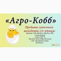 Продам цыплят бройлеров Кобб-500, Росс-308, Росс-708