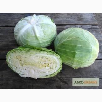 Семена белокочанной капусты NAOMI F1 / НАОМИ F1 (Китано)