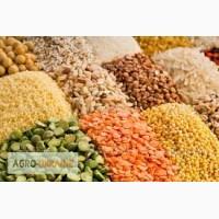 Закупаю пшеницу, кукурузу, ячмень в объемах до 5 тонн