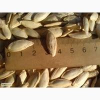 Продам гарбузове насіння Болгарка
