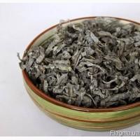 Ламинария (морская капуста) оптом и в ррозницу