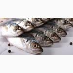 Оптовые поставки Черноморской рыбы по Украине+Экспорт