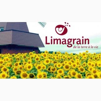 Продам семена подсолнечника LIMAGRAIN в ассорт