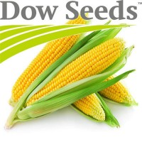 Посевной материал кукурузы от компании Dow Seeds