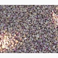 Калиброванные семена (Воздушка) чеснока Любаша