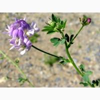 Семена/Посевной материал Люцерна Надежда