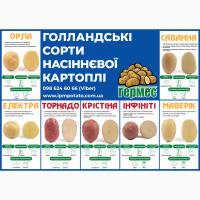 Картопля Насіння картоплі. Семенной картофель Ирландской селекция IPM