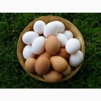 Продам яйцо куриное С0.С1.С2