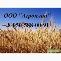 Головневые, синегузочные и проросшие: пшеницу,кукурузу, ячмень и просо
