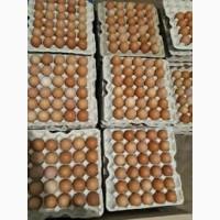 Продам яйцо куриное оптом от 10-100 ящиков+доставка по Украини за наш счет