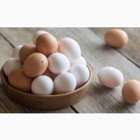 Принимаю заказы на инкубационное яйцо Мастер Грей, Испанка, Редбро, Фокси Чик, Гриз Бар