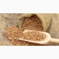 На постоянной основе покупаем Пшеницу Днепр обл
