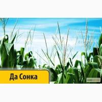 Кукуруза Да Сонка (Dow Seeds / Дау Сидс) импорт От Дистрибьютора лучшая цена