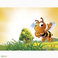 Покупаем мед, без антибиотика.Дорого