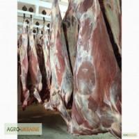 СРОЧНО продам от производителя говядину и свинину на экспорт внутренний рынок